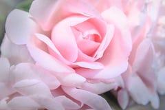 Soyeux rose s'est levé Photo libre de droits