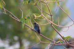 Soyez aussi heureux que l'oiseau bleu et nu comme geai bleu photos stock