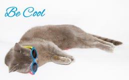 Soyez carte fraîche avec le chat image libre de droits