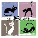 Soyez différent, un blanc et le chat trois noir sur un backgrou coloré Photographie stock libre de droits