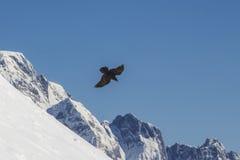 Soyez gratuit comme oiseau, aigle Image stock