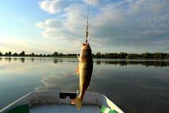 Soyez perché, petit dans la taille, propagé le lac, avec tourner et amorce artificielle en juillet Trophées du pêcheur photographie stock