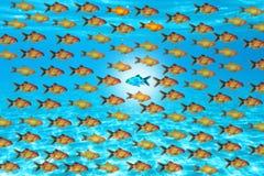Soyez sûr, bain contre le concept actuel avec de petits poissons sur la texture de l'eau bleue ou fond Photographie stock