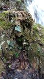 Soyez un avec la nature, cascade Images stock