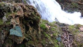 Soyez un avec la nature, cascade Image stock