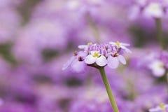 Spänna fast blomman Arkivbild