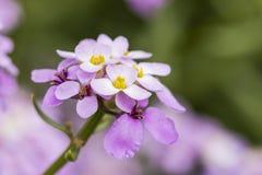Spänna fast blomman Arkivfoto