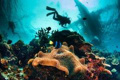 Spännande och upptagen undervattens- havsscape Royaltyfri Bild