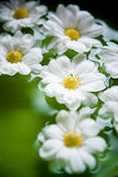 Spärliche Blumen Lizenzfreie Stockbilder