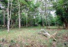 Spärlicher Wald Lizenzfreies Stockfoto