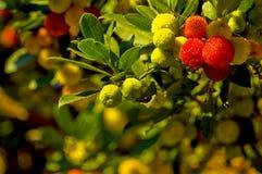Späte Herbstansicht stockbilder
