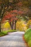 Später Autumn Afternoon im Smokies Stockbilder