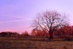 Später Autumn Colours Lizenzfreies Stockbild