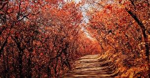 Später Herbst. Lizenzfreies Stockfoto