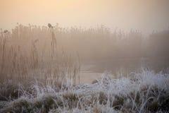 Später Herbstnebel auf einem Fluss Stockfotografie