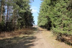 Spätes im Frühjahr bereits ziemlich warmes des Waldwegs!! lizenzfreies stockfoto
