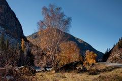 Spätherbst in den Altai-Bergen Lizenzfreies Stockfoto