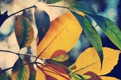 Spätsommerblätter und -sonnenschein Stockbild