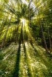 Spätsommersonnenlicht, das durch die Bäume an einem mystischen Weg bricht Stockfoto