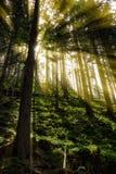 Spätsommersonnenlicht, das durch die Bäume an einem mystischen Weg bricht Lizenzfreies Stockfoto