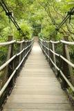 Spång i tropisk djungel fotografering för bildbyråer