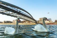 Spång Ojca Bernatka - bro över Vistulaet River i Krakow, Polen Royaltyfri Fotografi