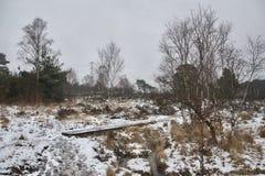 Spång/strandpromenad mellan ljung, gräs och träd på en grå snöig vinterdag arkivbild