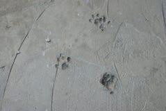 Spår av Cat Kitty Swans i nya cementkatter Kitty Pet royaltyfri bild