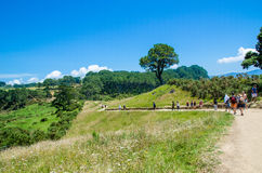 Spår av domkyrkalilla viken i den Coromandel halvön på den norr ön av Nya Zeeland Royaltyfri Bild