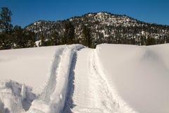 Spår av en snövessla i vinterskogen royaltyfri fotografi