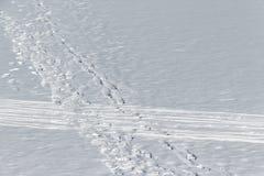 Spår av folk på snö Arkivbild