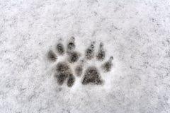 Spår av hund två tafsar på ny snö för vit bakgrund royaltyfri fotografi