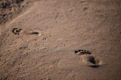 Spår av mannen som går på den sandiga stranden Arkivfoto