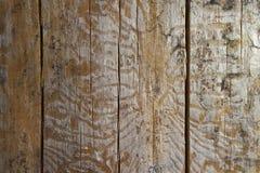 Spår av skällskalbaggen på den gamla stubben under skället royaltyfri bild
