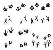 Spår av vilda djur och fåglar Paw Print Arkivbild