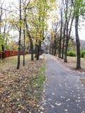 Spår bland träden Fotografering för Bildbyråer