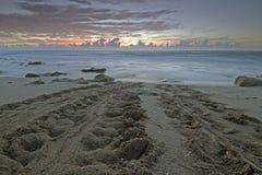 Spår för havssköldpadda på gryning, södra Florida arkivbild