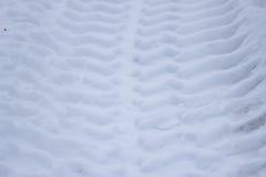 Spår från hjul av den stora bilen på snö Royaltyfri Fotografi