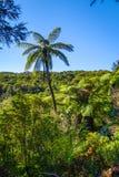 Spår i Abel Tasman National Park, Nya Zeeland Royaltyfri Bild