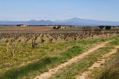 Spår i vingården Arkivbilder