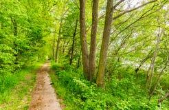 Spår längs gröna träd och sjön royaltyfri fotografi