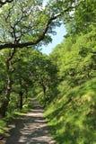 Spår med vandringsledet till och med aveny av träd Royaltyfria Foton