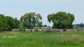 Spår och träd Arkivfoto