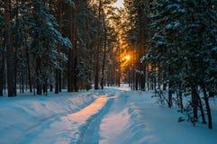 Spår på den insnöade vinterskogen Arkivbilder
