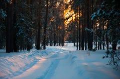 Spår på den insnöade vinterskogen Arkivfoton