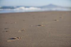 Spår på den sandiga stranden Fotografering för Bildbyråer