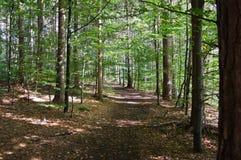 Spår till och med en skog Royaltyfria Bilder