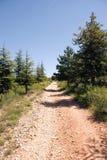 Spår till och med skog arkivfoto