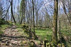 Spår till och med skog Arkivfoton