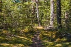 Spår till och med skog för infödd bokträd Royaltyfri Bild